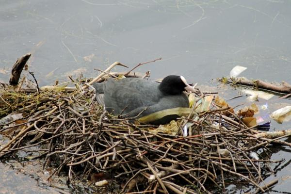 On The Nest by john calderbank