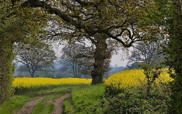 Mellow Yellow by Jasper87