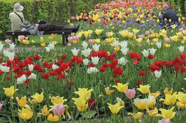 Too many tulips! by angler33333
