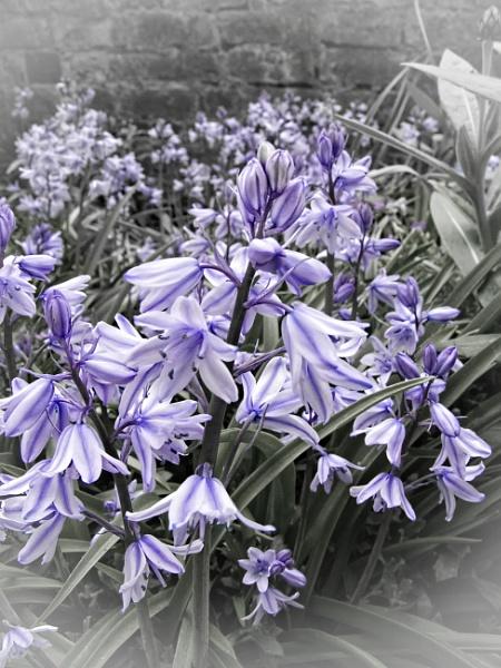 Spring by trihelm