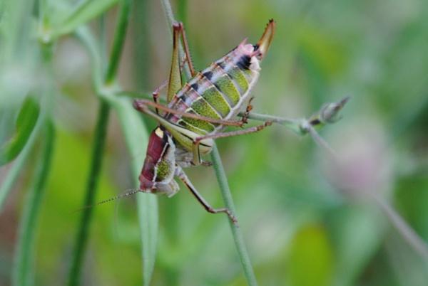 A Bugs day! by Chinga