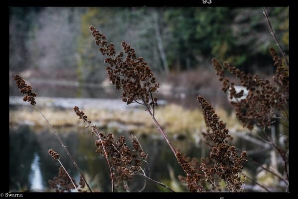 Macro Shot - Dry Leaf V by Swarnadip