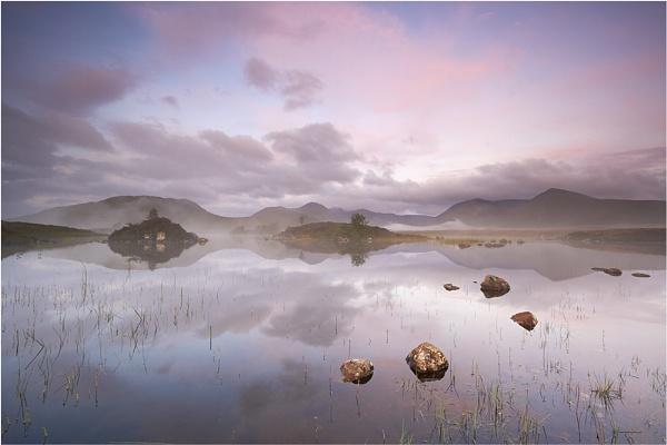 Highland Pinks by jeanie