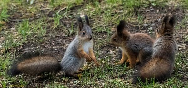 Squirrels. by kuvailija