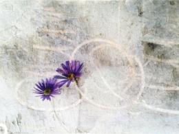 Flora in Spring.