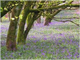 Dorset wood