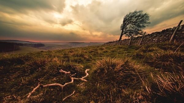 landscape by Sigita