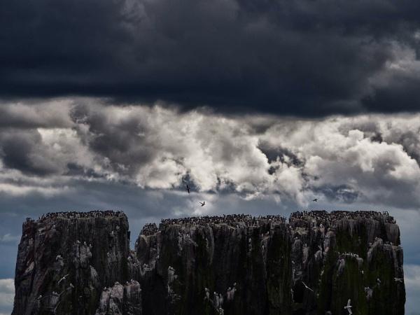 Farne Islands by stevewlb