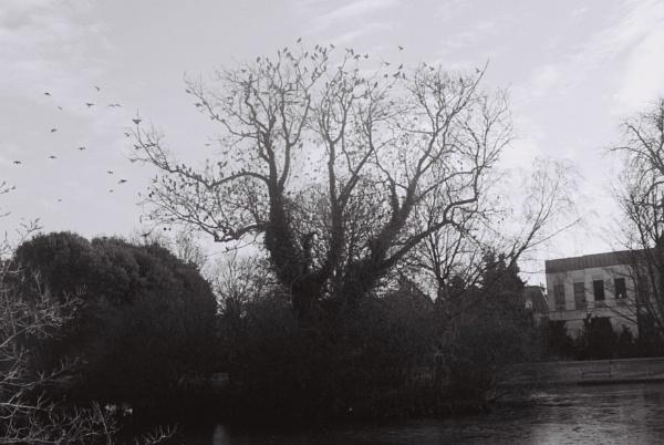Birds Fly over the Tree by DennisBloodnok