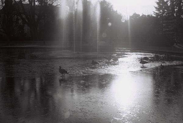 Birds on the Frozen Lake by DennisBloodnok