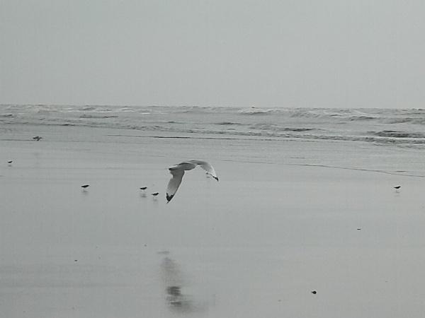 Seagulls @ Mondarmoni by c_dipankar1