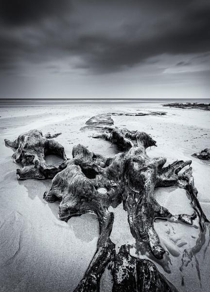 Tidal Revelations (Mono) by sherlob