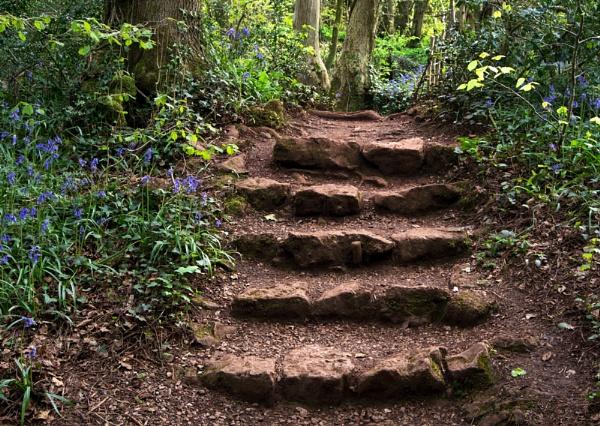 Puzzlewood Steps by SandraKay