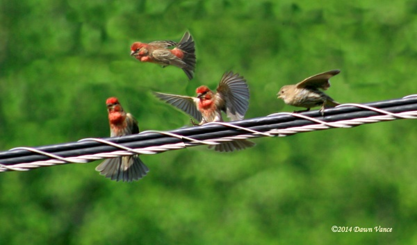 Finch gathering by dawnmichelle