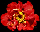 Red, Red by derekv