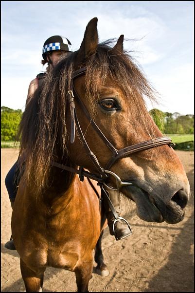 Equine by strokebloke