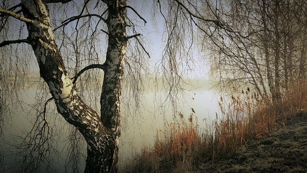 silence of nature by atenytom