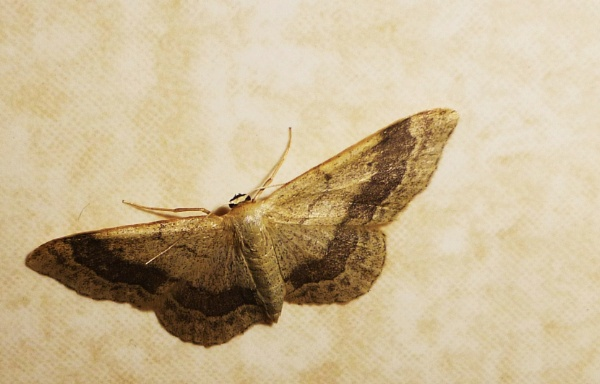 Lady Moth! by Chinga