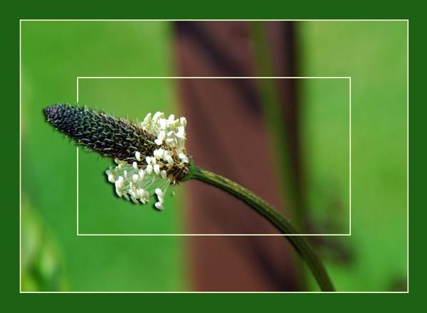 Wild Flower by stephens55