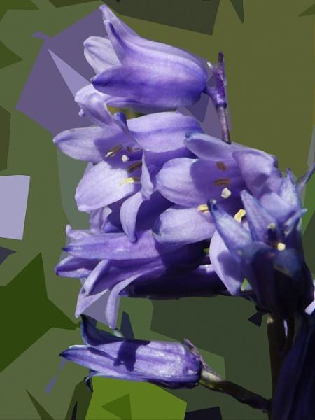 Bluebells by ZoeKemp