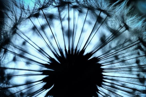 Seed head by stevewlb