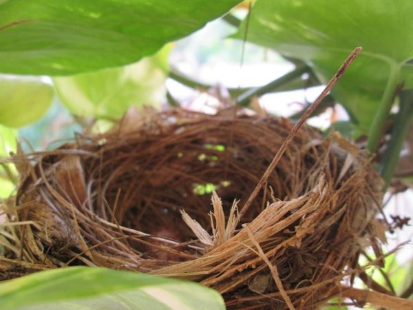 Nest behind Money Plant