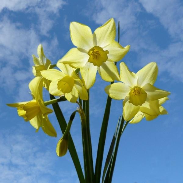 Spring Sunshine by BarbaraR