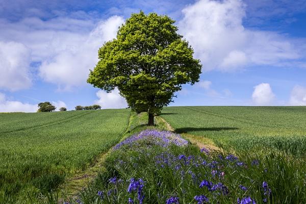 Lone Tree by ednys