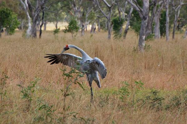 AUSTRALIA 2013 #64 by JN_CHATELAIN_PHOTOGRAPHY