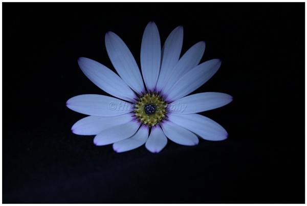 Blue by elliemoo