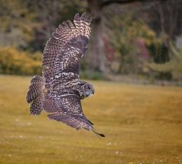 Muncaster Owl Centre