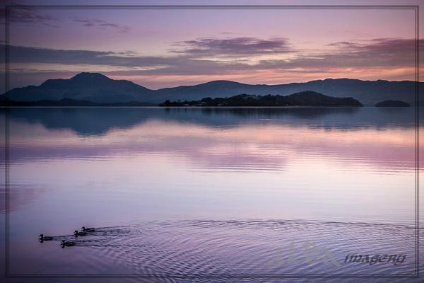 Ducks at Dawn by braddy