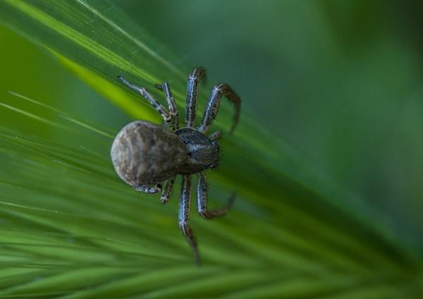 spider by darkocv
