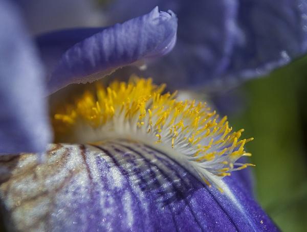 flower by darkocv