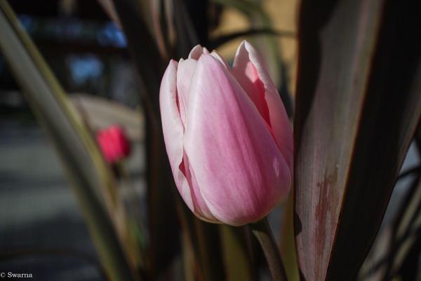 Macro Shot - Floral V by Swarnadip