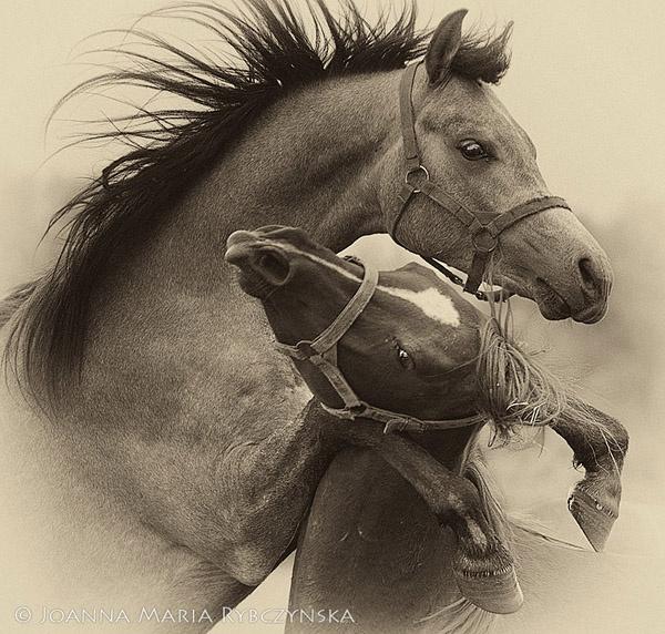 Horses 2014 #01 by missmoon