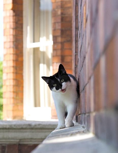 Kitten by victorburnside
