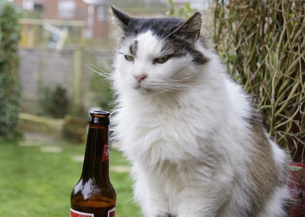 Cat, bottle, Bottle, Cat, by shoestring