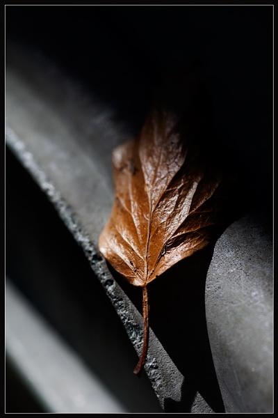 Gold Leaf by Morpyre