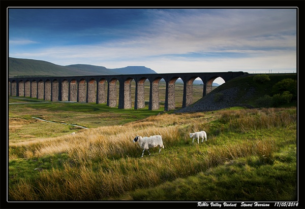 Ribblehead Viaduct With Some Sheep by dynexclick