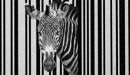 Zebra coded