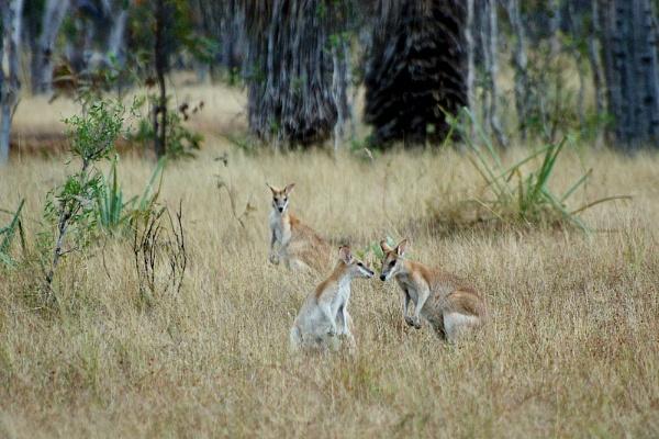 AUSTRALIA 2013 #72 by JN_CHATELAIN_PHOTOGRAPHY