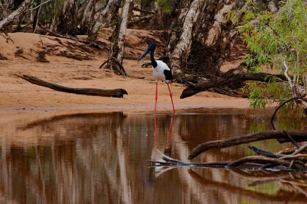 AUSTRALIA 2013 #74 by JN_CHATELAIN_PHOTOGRAPHY