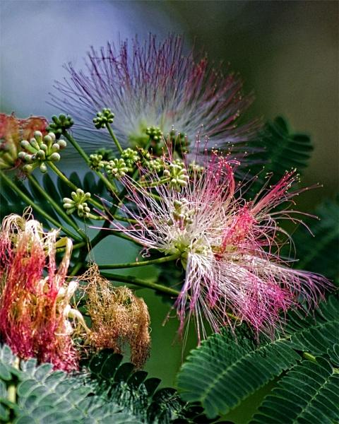 Flower by wsteffey