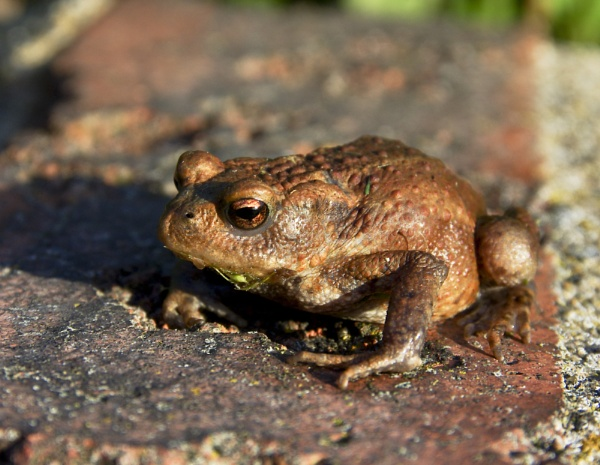 Baby Toad by AndysShots