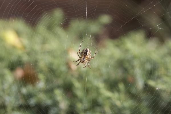 Spider by jimbob5643