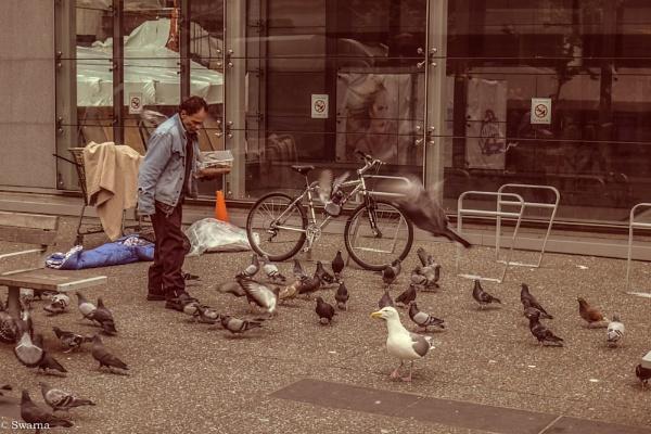 The Pigeon Man... by Swarnadip