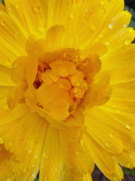 sunshine in the rain by ZoeKemp