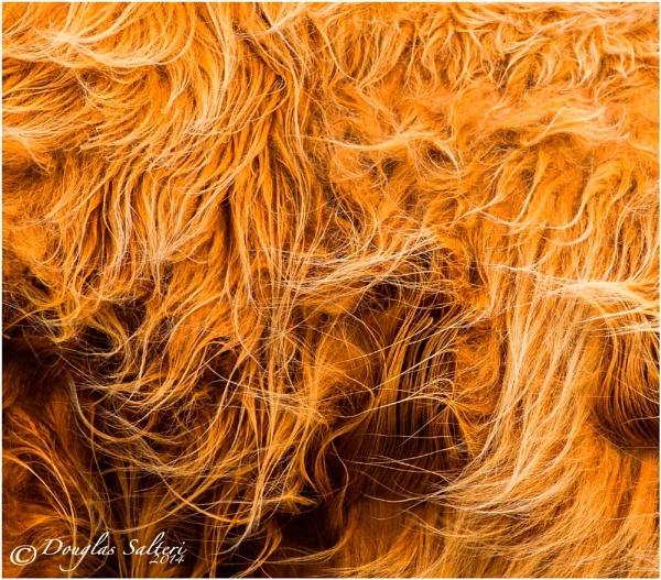 Golden Tresses... by Scottishlandscapes