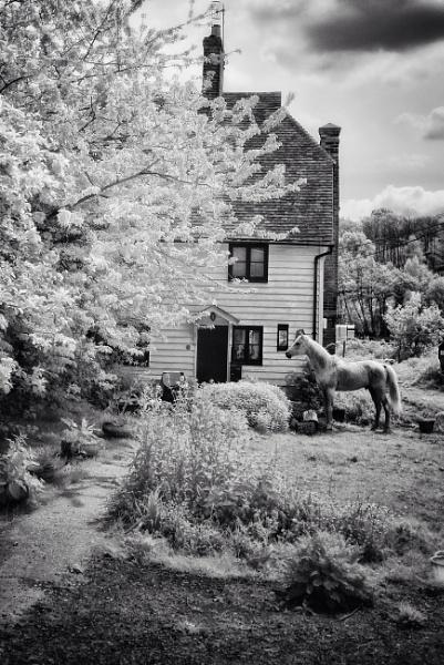 Horse by stevewlb